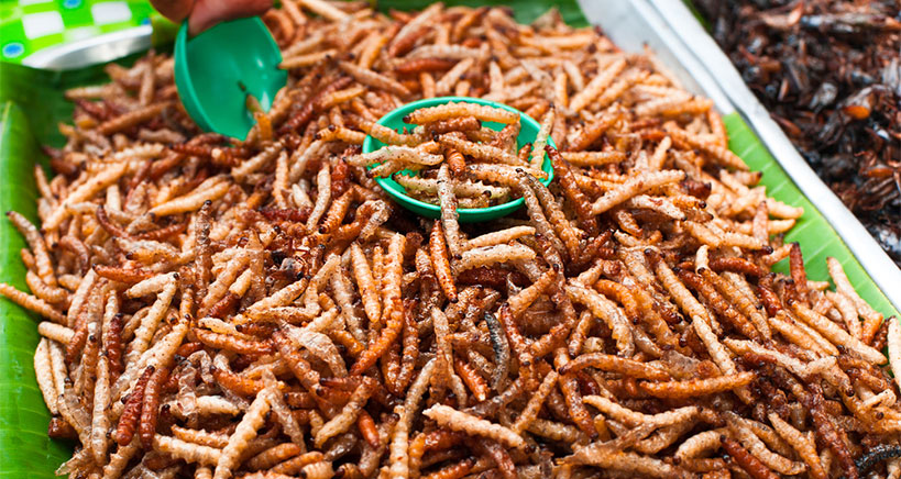 Edible insects food industry reports