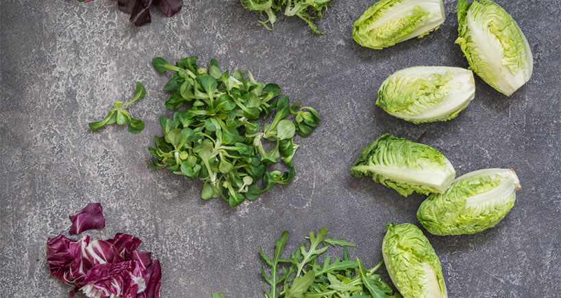 Little gem lettuce trend